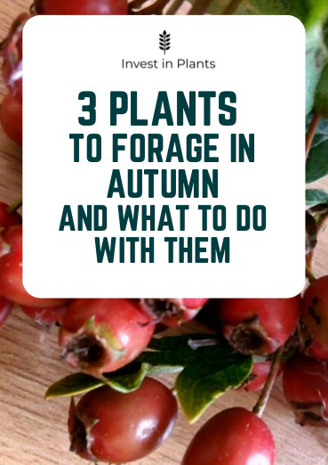 3 plants to forage in Autumn. (UK)