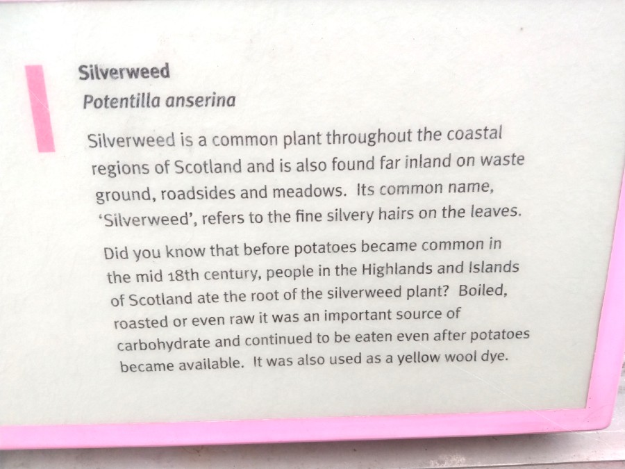 Silverweed uses Scotland sign