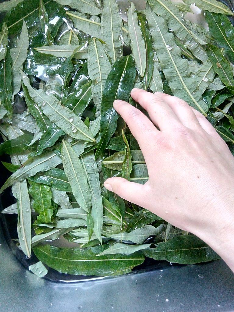 washing rosebay willow herb leaves